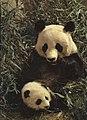 1964-02 1964年 大熊猫.jpg
