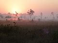 1st Mississippi sandhill crane nests found (6952271065).jpg