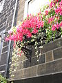 2005 windowbox England 2276534150.jpg