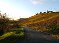 2007-11-12RemshaldenWeinberge01.jpg