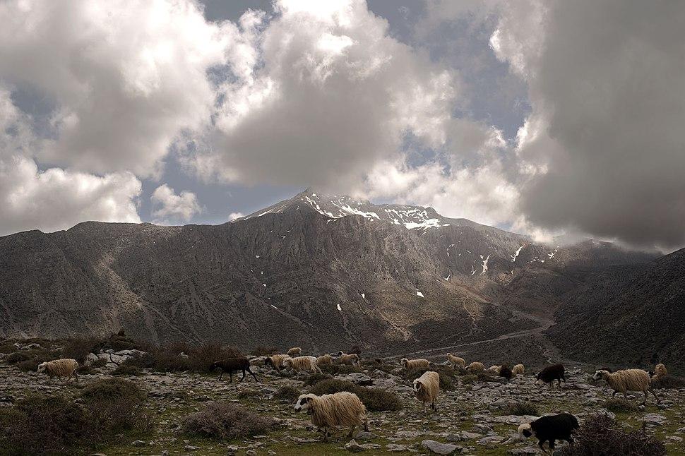 20090412 oroseira Dikth apo oropedio Limnakarou