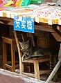 20090920 Kot na straganie w Tongli 5776.jpg