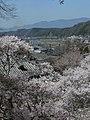 2011-4-5 本善寺桜と吉野川橋梁 - panoramio.jpg