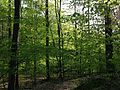 2013-05-06 18 38 56 View south along the Red Trail at YMCA Camp Bernie.jpg