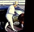 2013-09-28 Russ Harness-1967 Seattle TransAm-International Raceways Kent WA 002.jpg