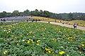 2014-04-04 石象湖 郁金香 liuzusai - panoramio (92).jpg
