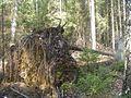 2014 0510Alam-Pedja Tormiheide 1.jpg