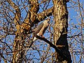 2016.04.11 19.17.11 DSC03285 - Flickr - andrey zharkikh.jpg