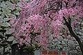 20160403 Himeji-Castle 3328 (26758517201).jpg