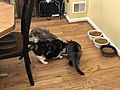 2019-10-24 23 06 02 Three cats eating in the Franklin Farm section of Oak Hill, Fairfax County, Virginia.jpg