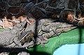 2019. Крокодиловый каньон в Ейске 012.jpg
