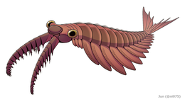 https://upload.wikimedia.org/wikipedia/commons/thumb/5/5c/20191203_Anomalocaris_canadensis.png/260px-20191203_Anomalocaris_canadensis.png