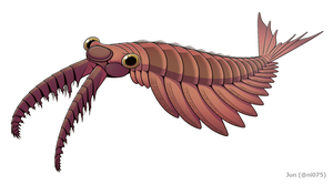20191203 Anomalocaris canadensis.png