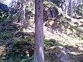 353 01 Mnichov, Czech Republic - panoramio (11).jpg