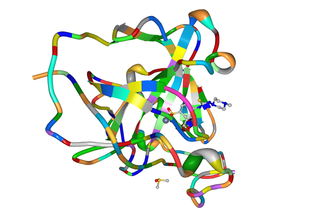 Acetazolamide - Carbonic anhydrase (ribbon) complex with a sulfonamide inhibitor (ball-and-sticks).