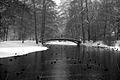 8803vik Park w Pszczynie . Foto Barbara Maliszewska.jpg