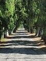 Aşiklar yolu MARMARİS - panoramio.jpg