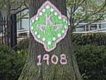 Alpha Kappa Alpha tree at Howard University.