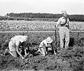 "A ""HAGANA"" MEMBER GUARDING AN AGRICULTURAL FIELD NEAR KIBBUTZ GAN SHMUEL. חבר בהגנה שומר על שדה חקלאי, ליד קיבוץ גן שמואל בשרון.D393-022.jpg"