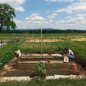 Community gardening - A 20ft x 20ft community garden plot in Harrisonburg, Virginia.