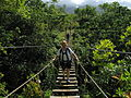 A Straggler, suspension bridge in Hawaii.jpg