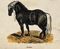 A horse. Coloured wood engraving. Wellcome V0021352.jpg