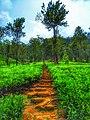 A path way to heaven.jpg