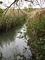 A rare glimpse of the River Ant - geograph.org.uk - 1020806.jpg