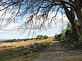 A sheltering tree by Cae'r-mynydd cottage - geograph.org.uk - 435985.jpg