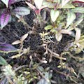 A species of spider on its web .jpg