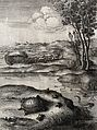 A tortoise is surrounded by frogs on the shore of a lake in Wellcome V0023019.jpg