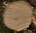 Acacia sieberiana var woodii, hout, Pretoria, b.jpg