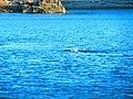 Acadia National Park (8111095992).jpg