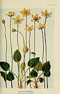 According to season; talks about the flowers in the order of their appearance in the woods and fields (1902) (16769662095).jpg