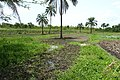 Agriculture in inland valleys in Benin - panoramio (16).jpg
