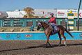 Alberta Breeders' Fall Classic 2014 - Horse Racing (15117895059).jpg