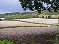 Albury Downs from Weston Wood - geograph.org.uk - 993323.jpg
