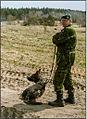 Alert Dog (8753639655).jpg