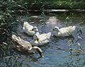 Alexander Koester Vier Enten im Teich.jpg