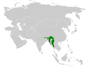 White-throated bulbul - Image: Alophoixus flaveolus distribution map