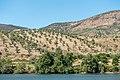 Alto Douro Vinhateiro DSC00309 (36492364484).jpg