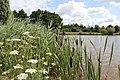 Am Rietplas-See in Emmen - panoramio (19).jpg