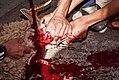 Animal sacrifice at Eid at Adha 6.jpg