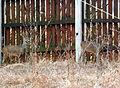 Animals13Slovakia3.JPG
