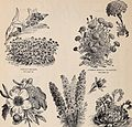 Annual descriptive catalogue of seeds - the largest collection in the world for the flower garden for the lawn for the vegetable garden for the farm and nursery (1895) (18239416999).jpg