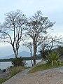 Antonina - State of Paraná, Brazil - panoramio (4).jpg