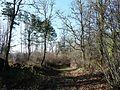 Antonne forêt Lanmary.JPG