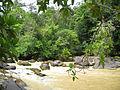 Approuague River - French Guiana.jpg