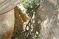 Araguainha - State of Mato Grosso, Brazil - panoramio (1040).jpg