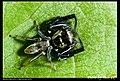 Araneae (5521476277).jpg